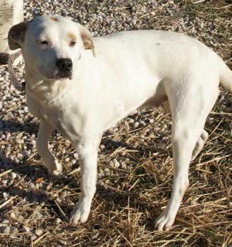 Cabarrus County Dog Adoption